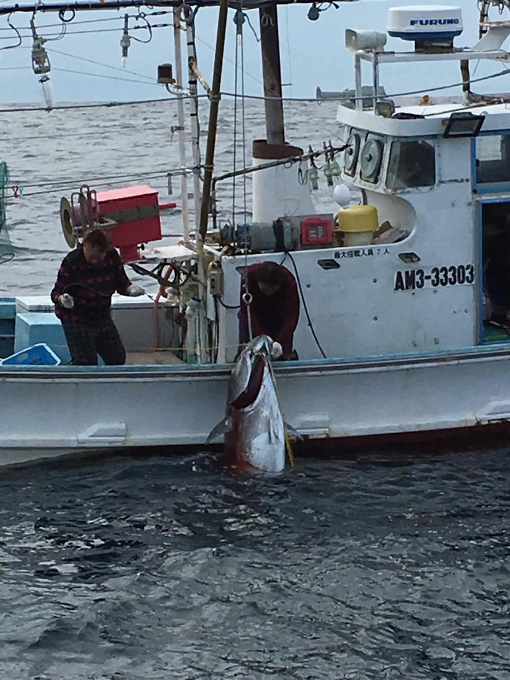 値段 マグロ 一本釣り