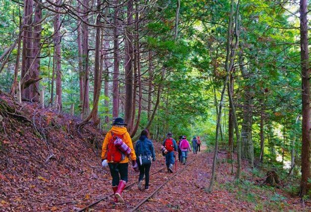 携帯もつながらないヒバの森で、よみがえりの森林ウォーク