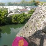 上野城にて日本一高いという石垣とピンクのマグロエコバック